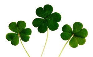 Lee más sobre el artículo ¿Por qué aprender inglés en Irlanda?